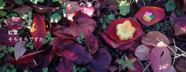 秋の手土産